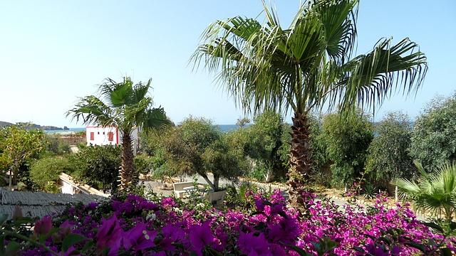 Jardin 2016021
